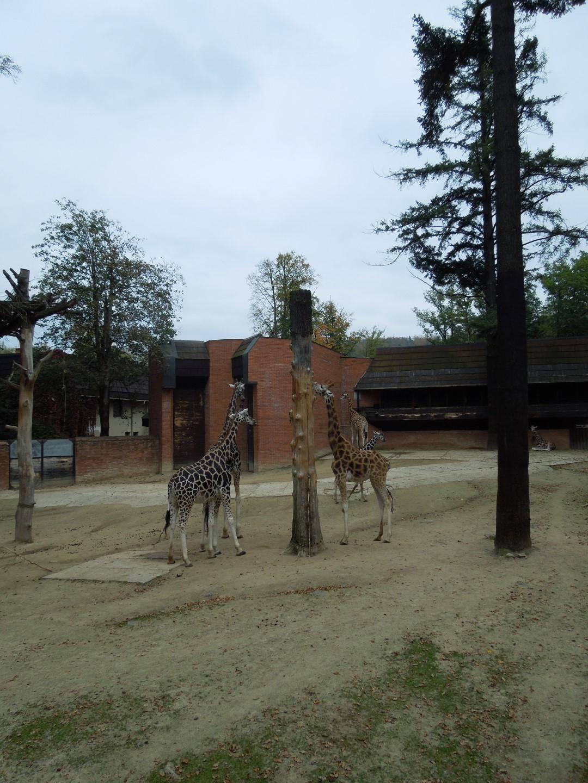 2014-10-11 ŠD zoo Liberec 001 (Large)
