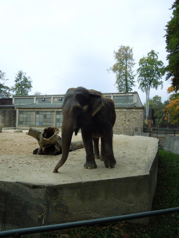2014-10-11 ŠD zoo Liberec 013 (Large)